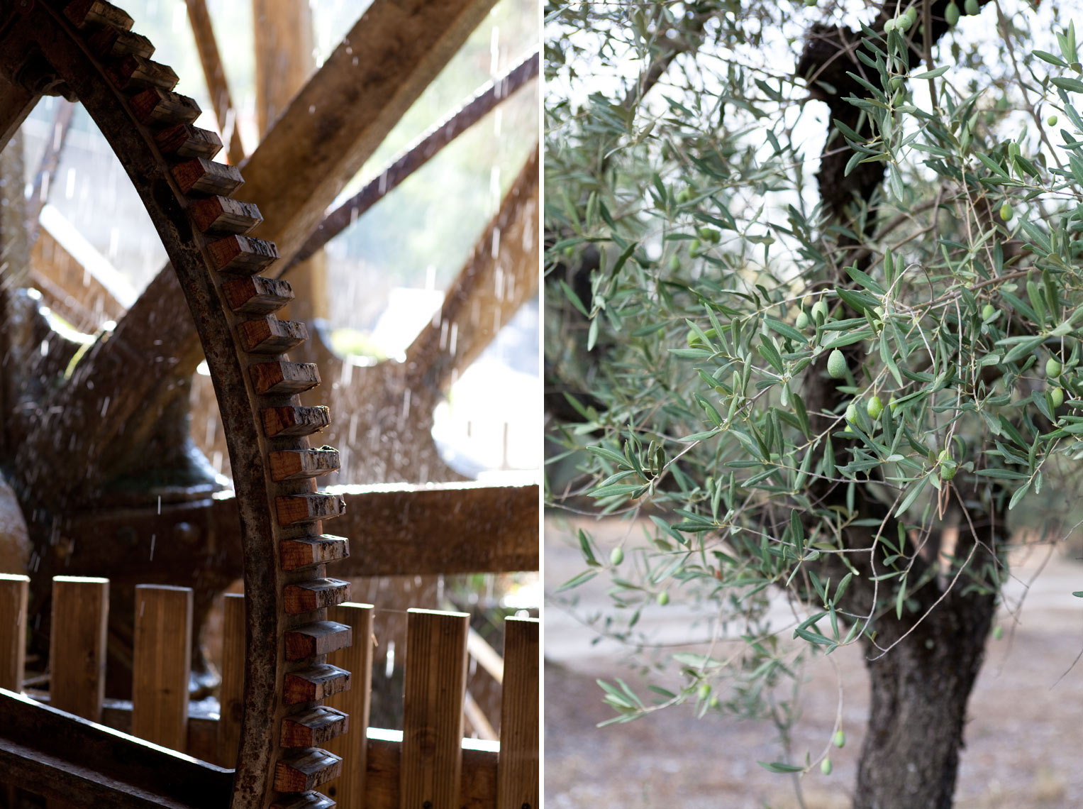 France_Waterwheel_OliveTree